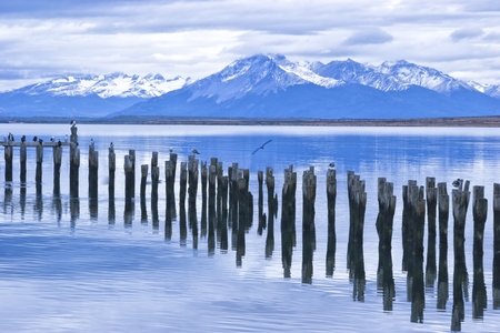 old damaged wooden lake pier with single poles occupied with sea birds with snowy peaks of Patagonia Andes Chile South America Puerto Natales, on cloudy winter day, with dramatic sky Фото со стока