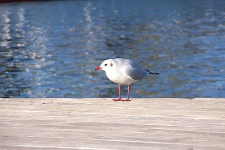 marine bird: marine bird Stock Photo