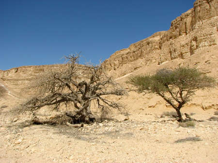 vadi: Vadi Barak in Negev desert.The Negev is the desert region of southern Israel. The indigenous Bedouin citizens of the region refer to the desert as al-Naqab. Stock Photo