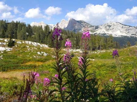 Alpine Meadow. The valley of Triglavs Lakes. Triglav National Park.Slovenia photo