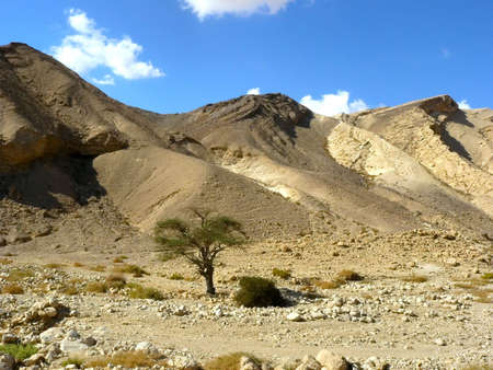 vadi: Vadi Peres, Negev desert.The Negev is the desert region of southern Israel.  Stock Photo