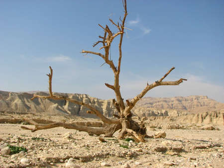 negev:  Negev desert. The Negev is the desert region of southern Israel. The indigenous Bedouin citizens of the region refer to the desert as al-Naqab. Stock Photo