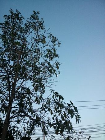 bluesky: The evening sky.