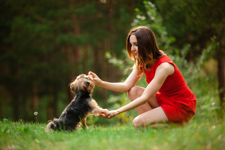 Yorkshire terrier gives paw for reward his owner, a young woman in a red dress on a background of greenery in the park 스톡 콘텐츠