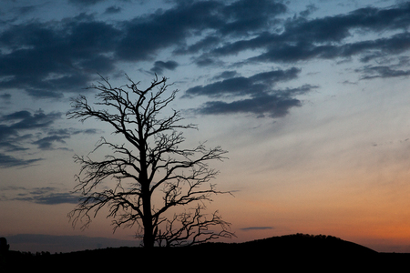 lonelyness: Meditative nature concept. Bare tree on background of cloudy dawn. Sad dark landscape.