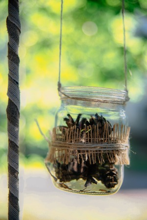hung: Rustic style decoration outdoor. Pine cones in glass jars hung on ropes. Summer green nature background with copy space.