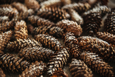 christmas backdrop: Winter holidays background of pine cones powdered with artificial snow. Merry Christmas brown backdrop.