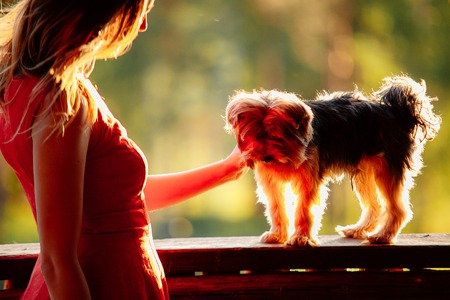 hands  hour: young attractive woman in a red dress with her pet Yorkshire terrier on a green background in sinset backlight