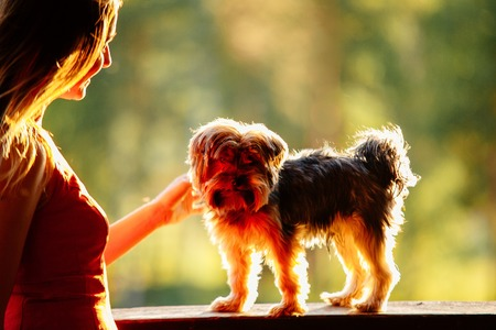 young attractive woman in a red dress with her pet Yorkshire terrier on a green background in sinset backlight