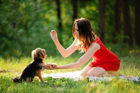 Yorkshire terrier gives paw for reward his owner, a young woman in a red dress on a background of greenery in the park Stock Photo