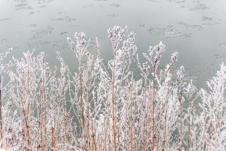 Winter landscape of a white snowy shore of a river. December day with frozen weather.