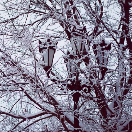 Winter background: beautiful street lantern and frost branches close up, cold weather