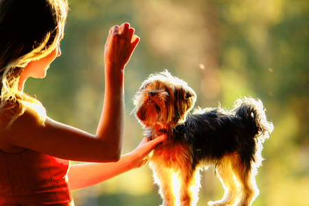 Yorkshire terrier gives paw for reward his owner, a young woman in a red dress on a background of greenery in the park Stockfoto