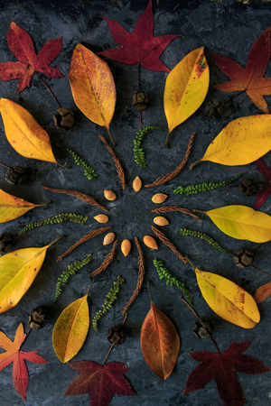 Autumn leaves in mandala shape flat lay on dark background. Botanic natural meditative technic for calm down.