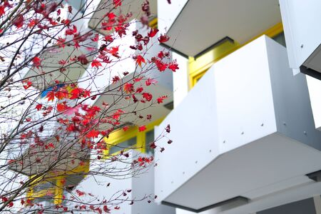 Red autumn maple leaves. Beautiful urban background of Fall season Banque d'images - 129472038