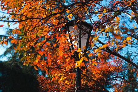 Colorful autumn in park. Street lantern among bright foliage. Beautiful city background of Fall season. Banque d'images - 129472295