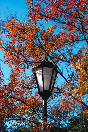 Colorful autumn in park. Street lantern among bright foliage. Beautiful city background of Fall season. Banque d'images - 129472293