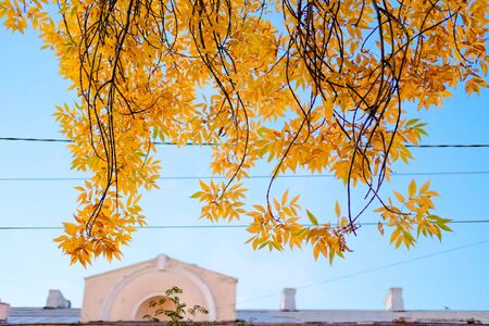 Autumn Yellow branches on background of blue sky. Beautiful nature background of Fall season. Banque d'images - 129472423
