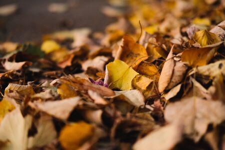 Dry yellow autumn leaves lies on asphalt sidewalk. Beautiful city background of Fall season.