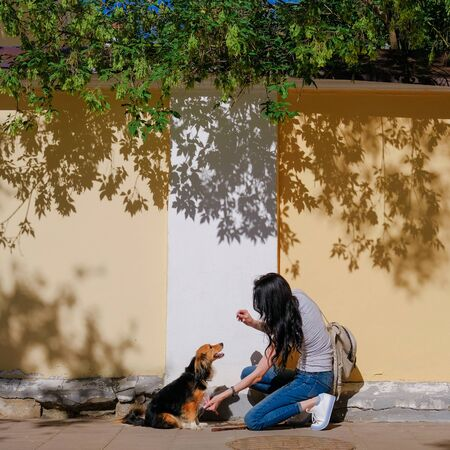 Woman and her dog on background of wall with contrast shadows. Funny spaniel mutt in summer city. 版權商用圖片