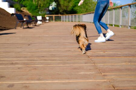 woman is running with her dog. Funny spaniel mutt in summer city. 版權商用圖片
