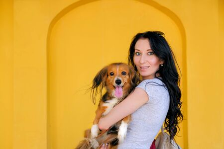 Portrait of Brunette woman and her dog on background of bright yellow wall. Funny spaniel mutt.