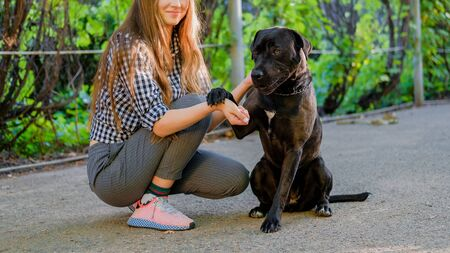 Young girl is walking with her dog on a leash on asphalt sidewalk. Strong black labrador and stafford terrier mix breed in green summer park 版權商用圖片