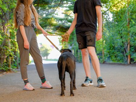 Young couple walking with dog on a leash on asphalt sidewalk. Strong black labrador and stafford terrier mix breed in green summer park Banco de Imagens