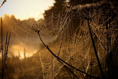 wil: spider net