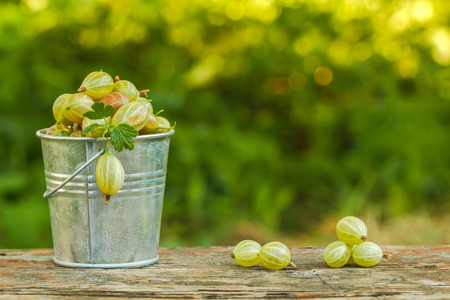 Gooseberries in a bucket on a background of green.