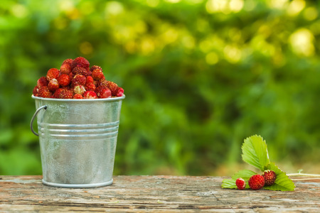 wild strawberry in a bucket on a background of green.