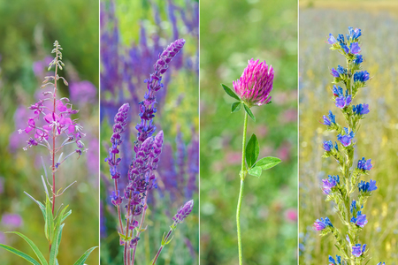 collection of wild medicinal flowers.