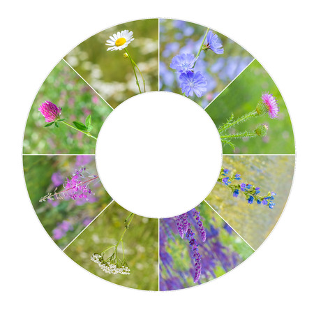 landscape flowers: collection of medicinal wild flowers in a frame.