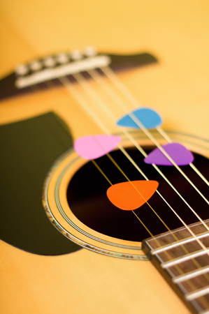picks: Vertical photo of four color guitar picks placed in springs of acoustic guitar from light solid spruce wood and with visible bridge and fretboard plus pickguard.