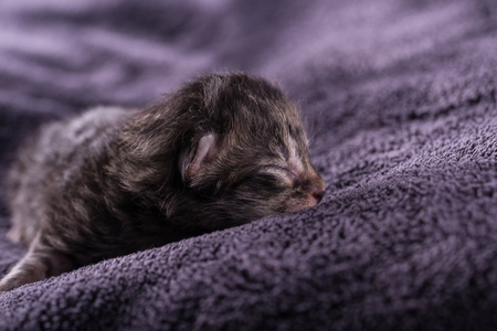 Horizontal photo of very small kitten which is one day old