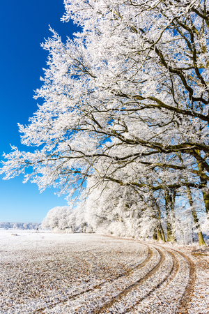 covered fields: Vertical photo with winter scene landscape. Footpath on white snowy field or meadow goes under tree alley which are covered by frost. Sky is clear and blue without clouds. Stock Photo