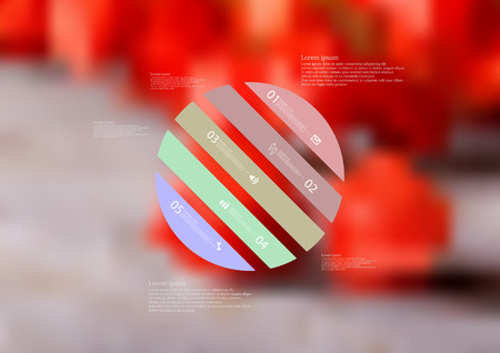 standalone: Illustration infographic template with motif of circle askew divided to five color standalone sections. Blurred photo with natural motif of several red physalis blooms is used as background.