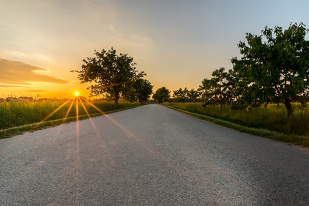 Horizontal photo of country road with sunset in background. Grey road with trees on both sides and clear blue evening sky without any vehicles.