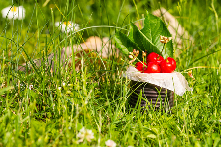 Horizontal photo with old vintage tin full of red fresh cherries. The can is placed in higher green grass with few white marguerites in background. Fruit is in tin with few leaves from cherry tree. Stock Photo