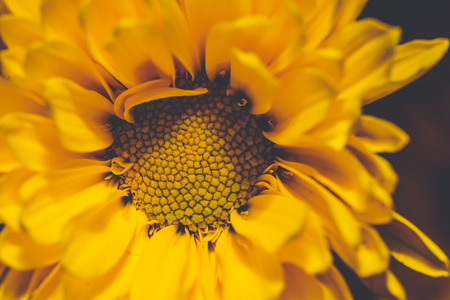 Horizontal close-up photo of flower bloom. Bloom has bright yellow center full of pistils and stigmas. Petal leaves has nice yellow color. Stock Photo
