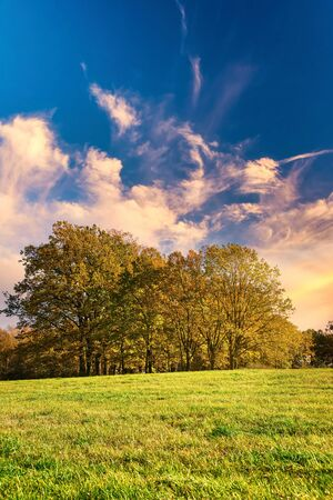 Vertical photo with few trees. Trees have orange autumn leaves. Plants are on meadow with green grass. Sky is blue with evening orange clouds.