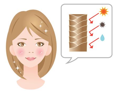 健康なキューティクル髪  イラスト・ベクター素材