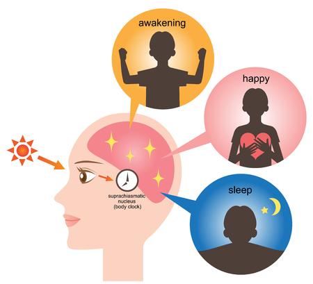 awake: biological clock Illustration