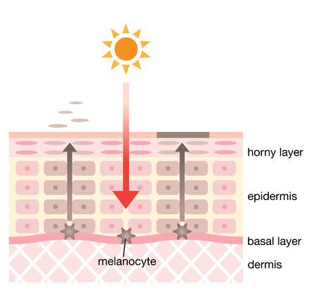 huid spot mechanisme Stock Illustratie