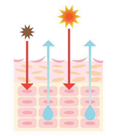 alergenos: mecanismo de la piel seca Vectores
