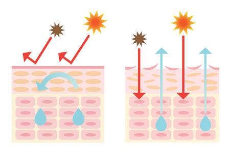 meccanismo di pelle sana e secca