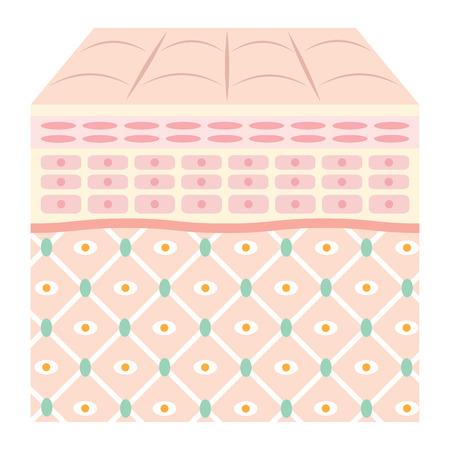 piel humana: Diagrama de la piel joven. Vectores
