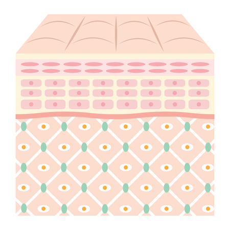 Diagram of young skin.