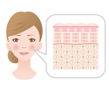Diagram van jonge gezonde huid die het collageen kader is gezond.