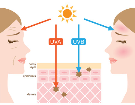 infographic skin illustration. the difference between UVA and UVB rays penetration